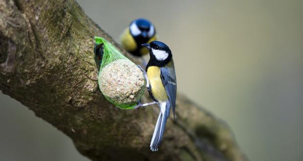 030215-birds-02