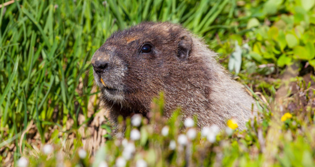 020816-groundhog-02